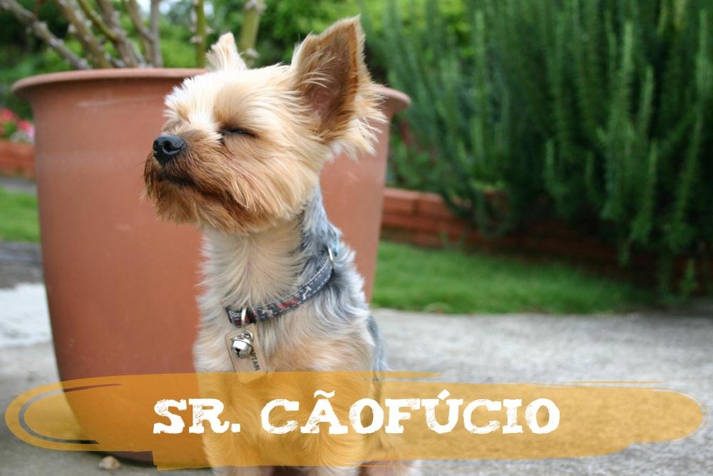 Sr. Cãofúcio