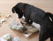 cão-destruição